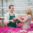 Employee in garden center giving woman tray of flowers — Stock Photo