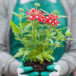 Woman holding plant out of its pot — Stock Photo