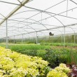 Stock Photo: Nursery greenhouse