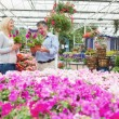 Couple choosing flowers in the garden centre — Stock Photo
