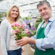 Garden center worker holding plant standing with woman — Stock Photo