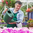 Smiling man watering flowers - Stock Photo