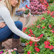 Couple searching red flowers in store — Stock Photo #23093940