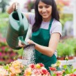 Garden center worker watering plants - Stock Photo