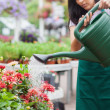 Woman watering plants — Stock Photo #23094282