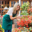 Stock Photo: Gardener caring about flowers