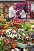 Couple choosing purple flowers — Stock Photo