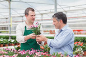 Man and employee discussing potted plant in greenhouse — Stock Photo
