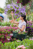 Woman shopping for flowers in garden center — Stock Photo