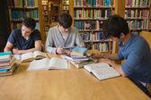 Estudiantes haciendo tareas en la biblioteca — Foto de Stock