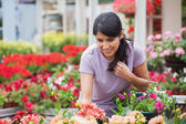 Woman looking at plants in garden center — Stock Photo