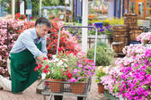 Man unloading flowers from trolley — Stock Photo