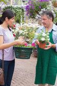 Woman talking to garden center employee — Stockfoto