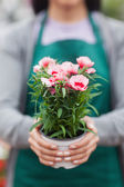 Florist showing a flower — Stock Photo