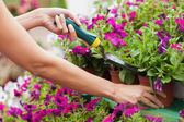 Woman spading flowers — Stock Photo