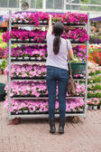 Woman taking flower from the shelves — Stock Photo