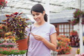Woman looking for the name of the plant — Stock Photo