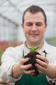 Jardinero sosteniendo arbusto a la planta — Foto de Stock