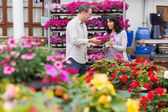 Couple discussing purple flowers — Stock Photo