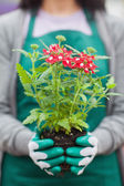 Woman holding plant out of its pot — Stockfoto