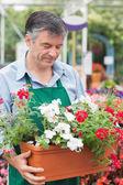 Gardener holding boxes of plants — Stock Photo