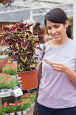 Woman looking for the price of plant — Stock Photo