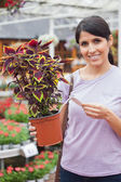 Woman reading the price of plant — Stock Photo