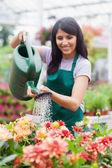 Garden center worker watering plants — Stock Photo