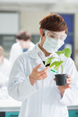 Woman standing at the laboratory holding a plant adding green ch — Stock Photo