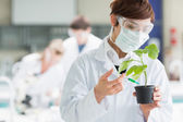 Woman standing at the laboratory holding a plant adding chemical — Stock Photo