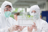 Students looking at test tubes with seedlings in them — Stock Photo
