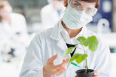 Woman holding a plant adding green liquid to soil — Stock Photo