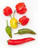 Various chillies — Stock Photo