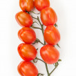 Vine of tomatoes — Stockfoto