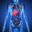 Digital blue human with highlighted liver - Stock Photo