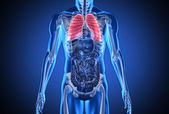 Digital blue human with highlighted lungs — Stock Photo