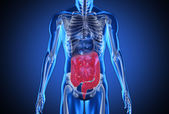 Digital blue human with highlighted digestive system — Stock Photo