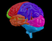 Brain with highlighted sections — Stock Photo