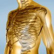 Stock Photo: Yellow digital body with visible skeleton