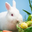 White bunny sitting beside easter eggs in green basket and carro — Stock Photo