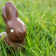 Stock Photo: Chocolate bunny in the grass