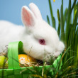 White rabbit resting on easter eggs in green basket - Stock Photo