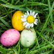 Small easter eggs nestled in the grass with a daisy — Stock Photo