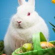 White rabbit sitting behind easter eggs in green basket — Stock Photo #24147689