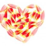 Tulips petal in a heart shape — Stock Photo #24148083