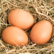 Three eggs — Stock Photo