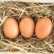 Stock Photo: Three eggs in basket