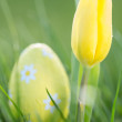 Yellow tulip growing with easter egg - Stock Photo