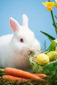 Coelhinho branco, sentado ao lado de ovos de páscoa na cesta verde e carro — Fotografia Stock
