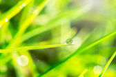 Dew on the green grass — Stock Photo